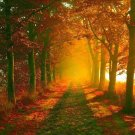 Morning Sunbeam Forest Nature Path Art 32x24 Poster Decor