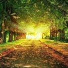 Morning Sunbeam Forest Nature Path Art 32x24 Poster Decor