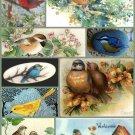 Watercolour Achilles Bird Dove Art 32x24 Poster Decor