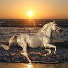 Running Horse Art 32x24 Poster Decor