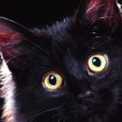 Cute Black Cat Baby Art 32x24 Poster Decor