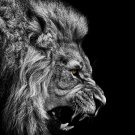 Fire Lion Animal Art 32x24 Poster Decor
