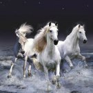 Running Horse Wall Print POSTER Decor 32x24