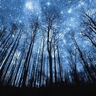 Bright Starlight Sky Nature Wall Print POSTER Decor 32x24