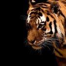 The Ferocious Tiger Art Wall Print POSTER Decor 32x24