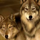Wolf Highlands Wild Nature Animals Wall Print POSTER Decor 32x24