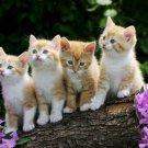 Cute Cat Baby Wall Print POSTER Decor 32x24