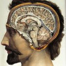 Vintage 1800 S Human Brain Surgical Anatomy Wall Print POSTER Decor 32x24