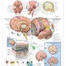 Chart Human Body Anatomy Wall Print POSTER Decor 32x24