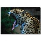 Leopard Yawning Africa Wild Animals Poster 32x24