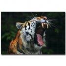 Tiger Yawning Africa Wild Animals Poster 32x24