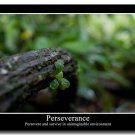 PERSEVERANCE Motivational Quotes Art Poster Home Decor 32x24