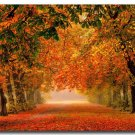 Autumn Fallen Leaves Forest Path Nature Art Poster Picture 32x24