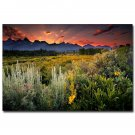 Grand Teton National Park Nature Poster Spring Flowers And Mountain 32x24