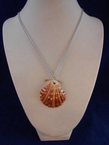 Fashion Jewelry, 16� Scallop Shell Pendant S120, Natural, Different and Unique