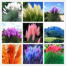 1200 PCS/package PAMPAS GRASS seeds ,rare reed flower seeds, Selloana Garden decoration DIY!