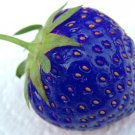 100pcs/bag blue strawberry rare fruit vegetable seed bonsai plant home garden free shipping