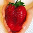 1000pcs Germany super big strawberry seeds, fruit seeds, garden supplies