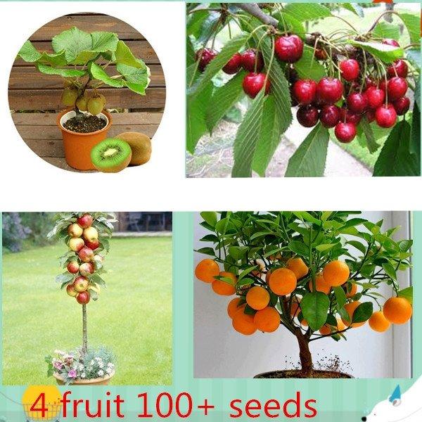 4 kind fruit ,bonsai fruit tree seeds ,vegetable and fruit seeds total 100+ seeds