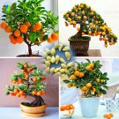 40 /Bag Bonsai Orange Tree Seeds Organic Fruit Tree Seeds For flower pot planters very delicious