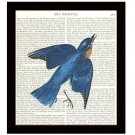 Audubon Dictionary Art Print 8 x 10 Blue Bird Vintage Wildlife Illustration Home Decor