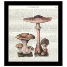 Dictionary Art Print 8 x 10 Mushroom Collage Botanical Kitchen Decor Unframed