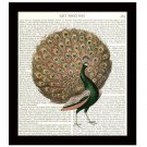 Peacock Dictionary Art Print 8 x 10 Victorian Illustration Vintage Home Decor