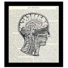 Victorian Medical Science 8 x 10 Dictionary Art Print Human Brain Neck Diagram