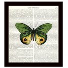 Dictionary Art Print 8 x 10 Green and Gold Butterfly Home Decor Cottage Chic
