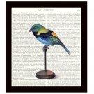 Parakeet 8 x 10 Dictionary Art Print Colorful Bird Illustration Home Decor
