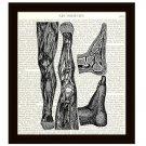 Dictionary Art Print Victorian Human Anatomy Foot Leg Medical Science