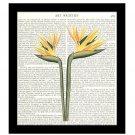 Dictionary Art Print 8 x 10 Redoute Bird of Paradise Tropical Botanical Home Decor