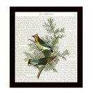 Dictionary Art Print 8 x 10 Vintage Audubon Birds Cedar Waxwings Wall Decor