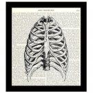 Human Sternum 8 x 10 Dictionary Art Print Rib Cage Bones Anatomy Medical Science