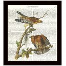 Audubon Dictionary Art Print 8x10 Red Shouldered Hawks Vintage Birds Home Decor