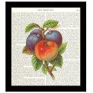 Dictionary Art Print 8 x 10 Kitchen Art Apple Plums Home Decor Housewarming Gift