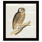 Dictionary Art Print 8 x 10 Barn Owl Vintage Birds Wildlife Nature Home Decor
