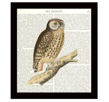 Dictionary Art Print 8 x 10 Barn Owl Vintage Birds Wildlife Nature Home Decor