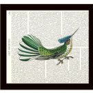 Dictionary Art Print 8 x 10 Colorful Hummingbird Wildlife Nature Home Decor