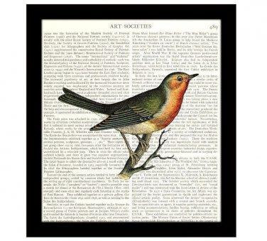 Robin 8 x 10 Dictionary Art Print Colorful Bird Illustration Home Decor