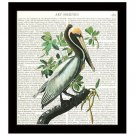 Audubon Dictionary Art Print 8 x 10 Brown Pelican Vintage Birds Wildlife Decor