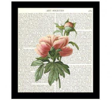 Flower Dictionary Art Print 8 x 10 Pink Peony Redoute Botanical 19th Century