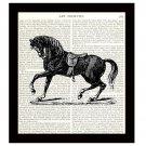 Horse Dictionary Art Print 8 x 10 Stallion Vintage Equestrian Home Decor