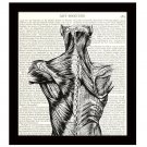 Anatomy 8 x 10 Dictionary Art Print Back Muscles Victorian Medical Science Decor