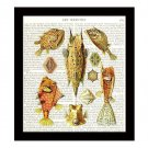 Fish Dictionary Art Print 8 x 10 Orange and Tan Nautical Illustration Home Decor