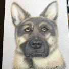 Pet portrait personalised custom