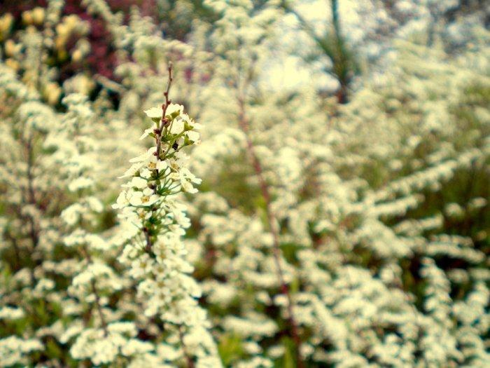 vintage flora - 8x12 print