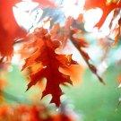 fall foliage - 4x6 print