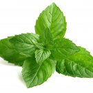 Peppermint (Mentha × piperita) 250 seeds Grow your own herb * ez grow *SHIPPING FROM US* CombSH E11