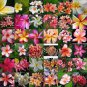 Frangipani Plumeria Rubra 10 SEEDS MIXED COLORS Hawaiian lei flower *SHIPPING FROM US* CombSH M76